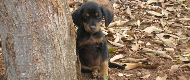 Mx puppy
