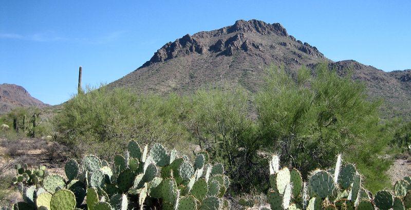 Cactusland 2