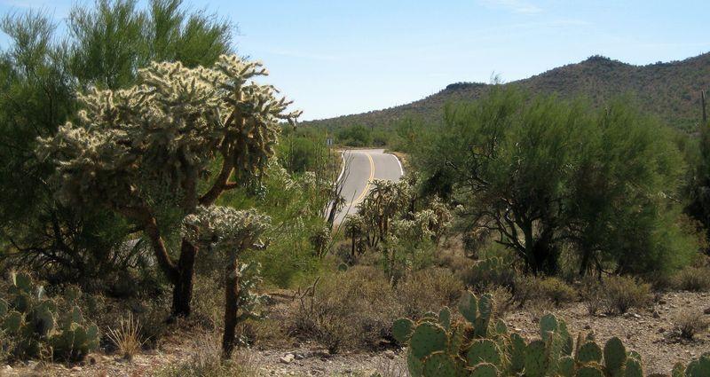 Cactusland 1