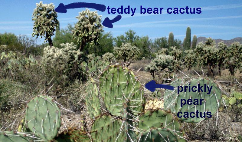 Cactusland 4