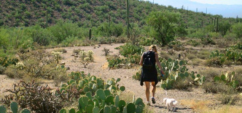 Strolling thru cactus land