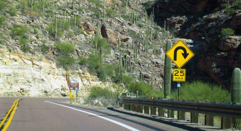 Saguaro hills