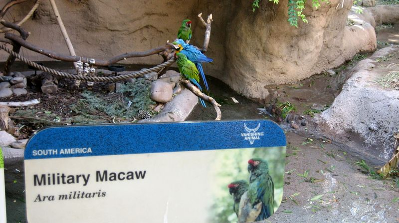 Zoo 12 macaws