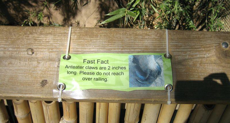 Zoo 14 anteater 1