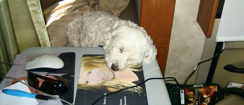 The Bert naps