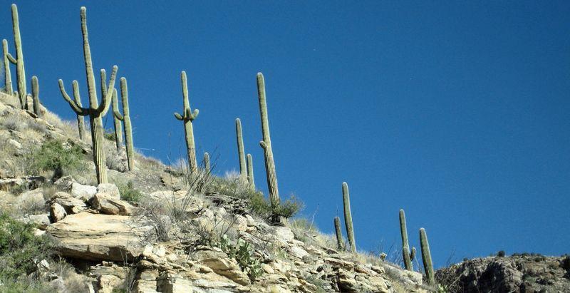 Saguaro hill