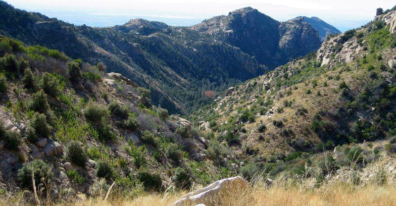 Mt Lemmon hills