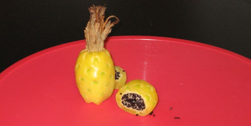 Barrel cactus fruit