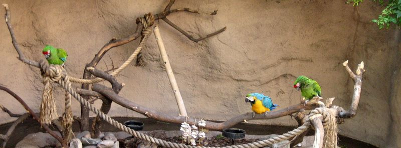 Zoo 11 macaws