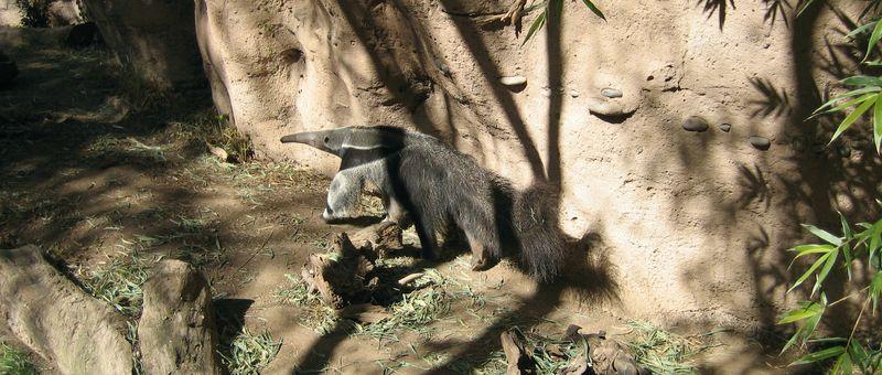 Zoo 15 anteater