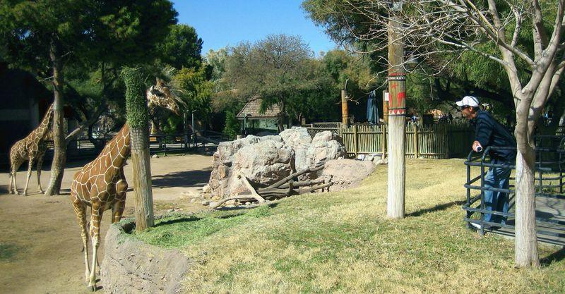 Zoo 74 hilarious staredown challenge