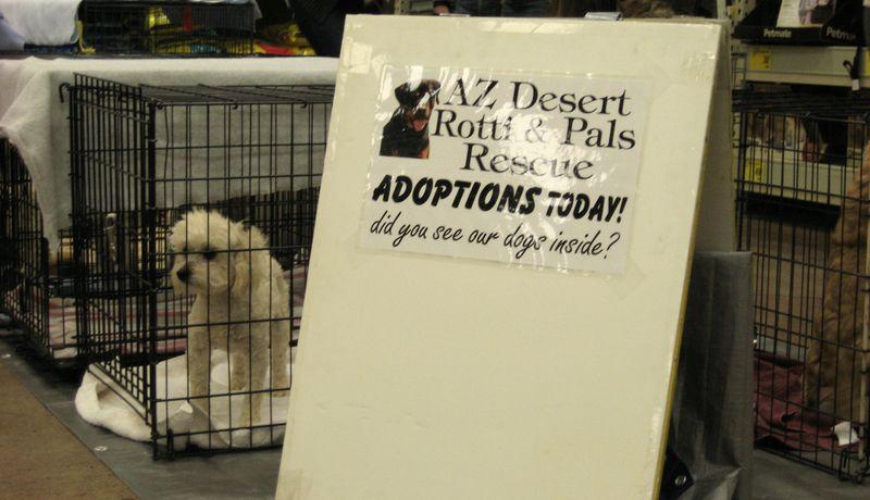 AZ Desert Rotti Rescue