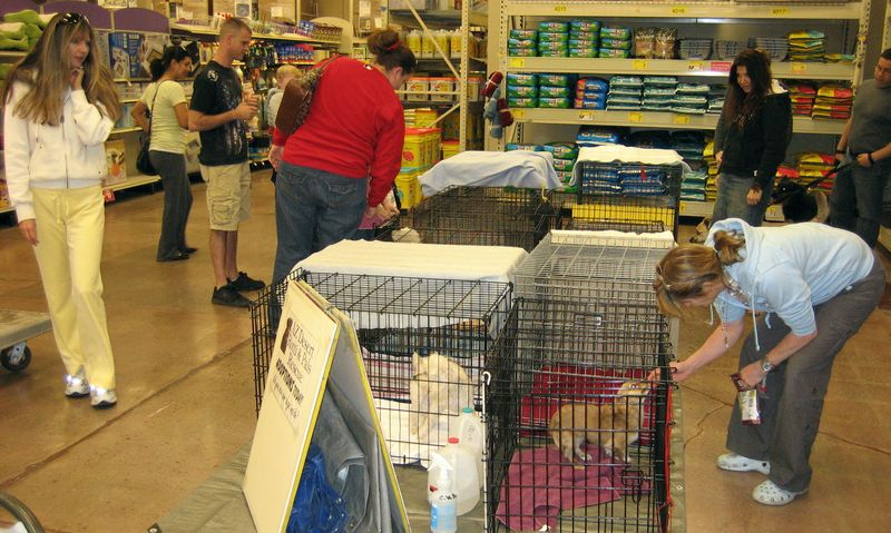 Rescue day at Petsmart