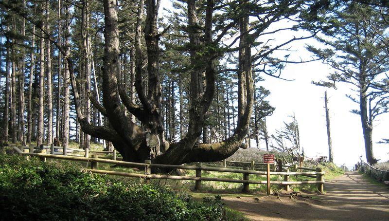 Octo tree