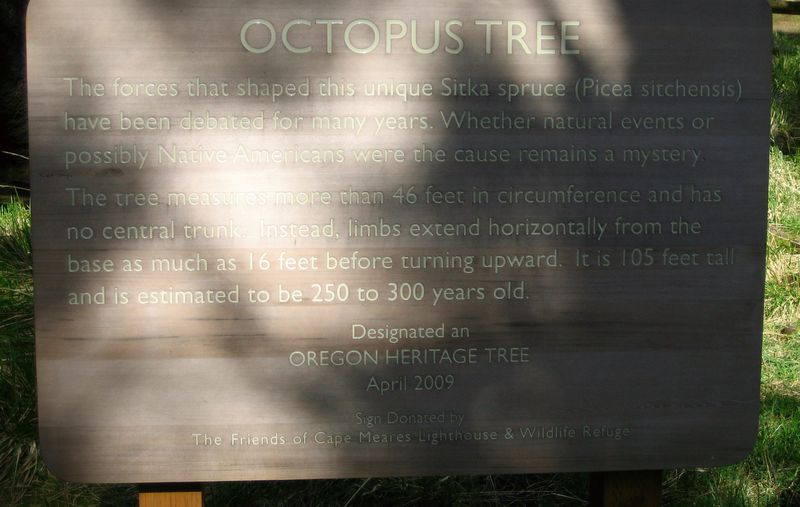 Octo tree sign