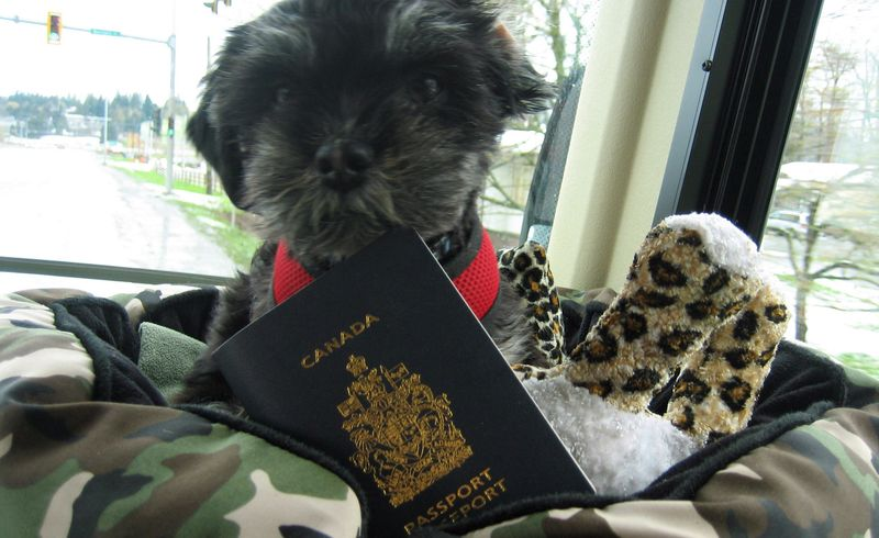 Norm and a Canadian passport