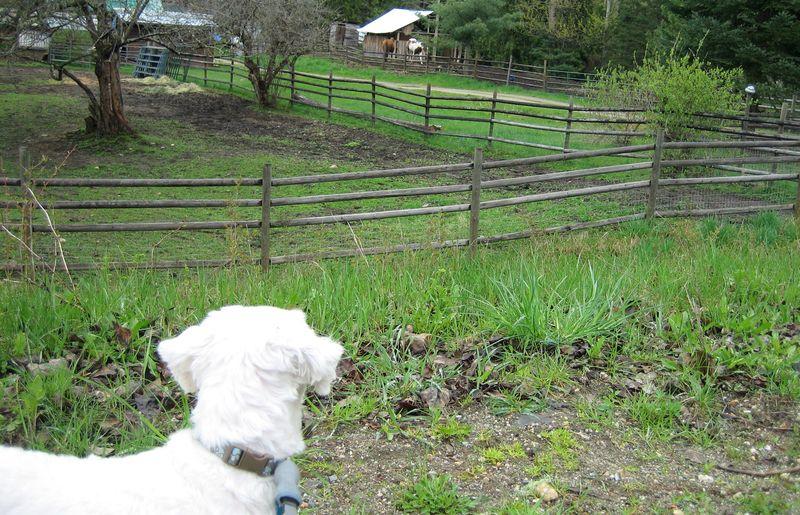 The Bert loves horses