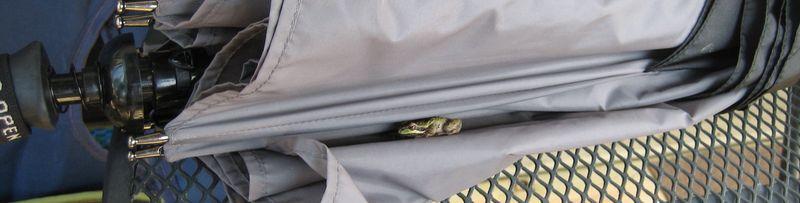 Hey froggy