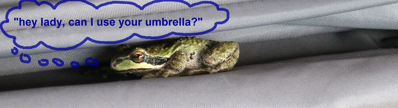 Froggy in the umbrella