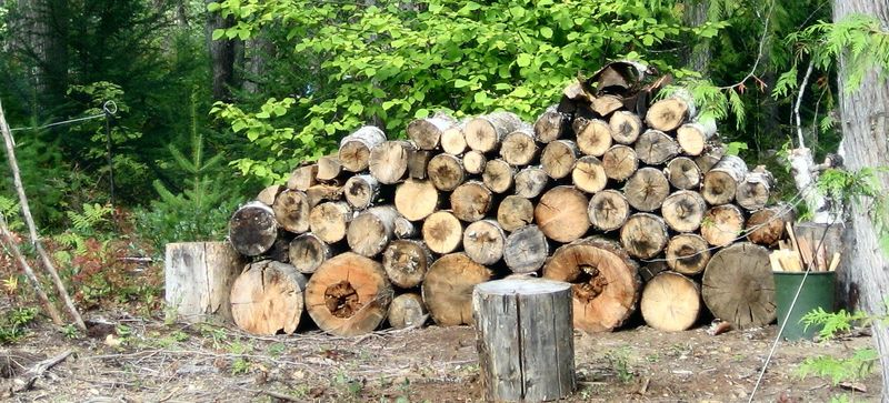 Who keeps moving the dam woodpile