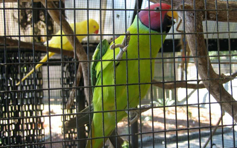 I'm not a bird person but they were all so colorful, almost neon - I had to get some pics