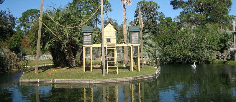Lemur Island, land of the leaping lemurs