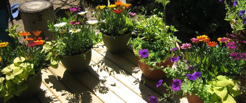 Plants on the deck