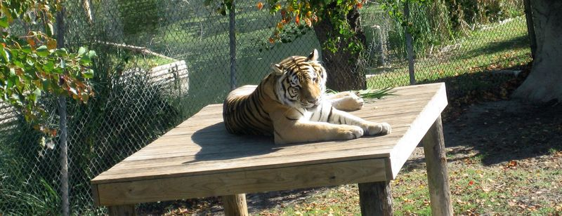 This is the best zoo EVER to see big jungle cats