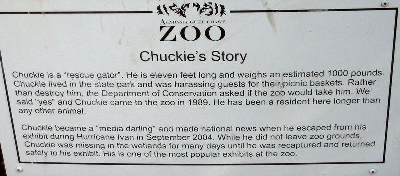 Chuckie the rescue gator