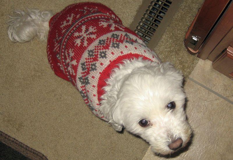 Bert loves her xmas sweater
