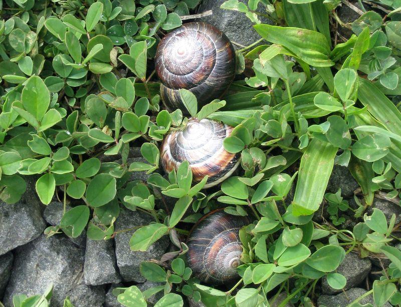 Live snails everywhere