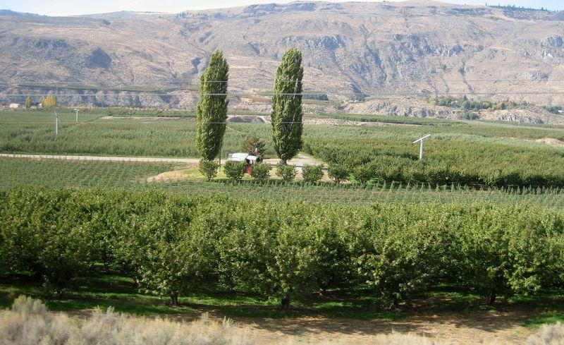 Washinton apple farms