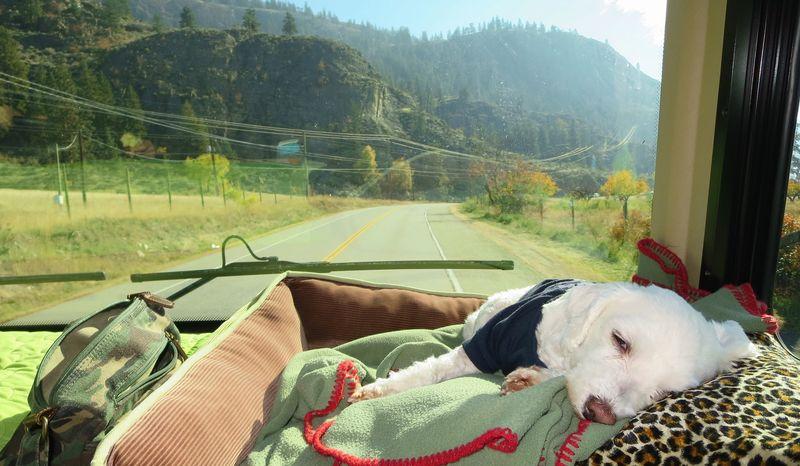 The Bert loves car rides