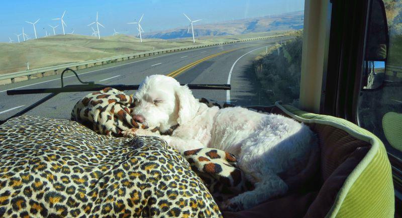 Bert and the windmills