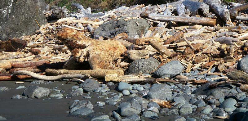Driftwood seal