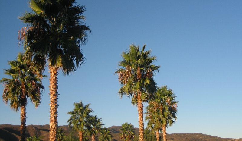 Sunny Cali