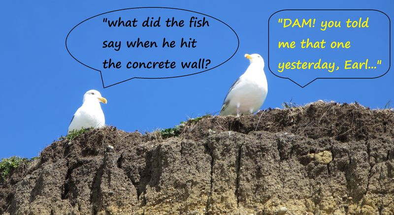 So two gulls walk into a bar...