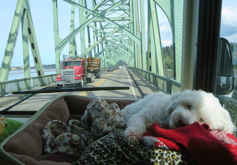 Bert missed the whole bridge
