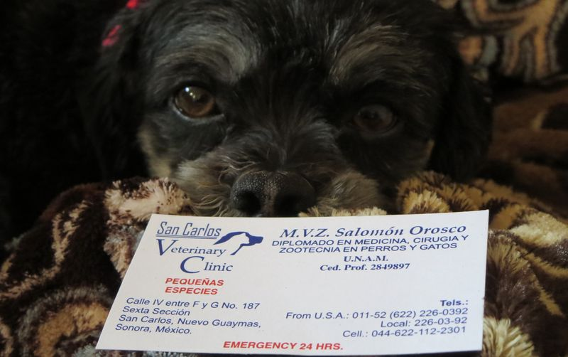 Normie has the biz card