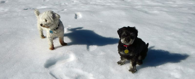 Mutts in the snow