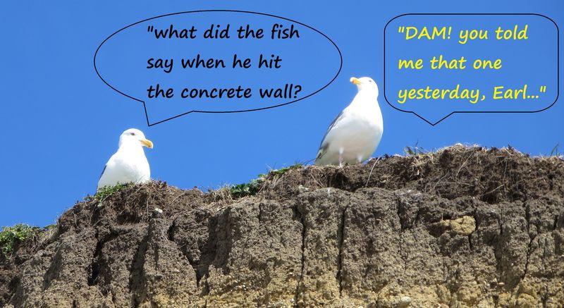 So two gulls walk into a bar...