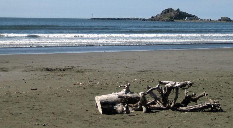 Huge driftwood