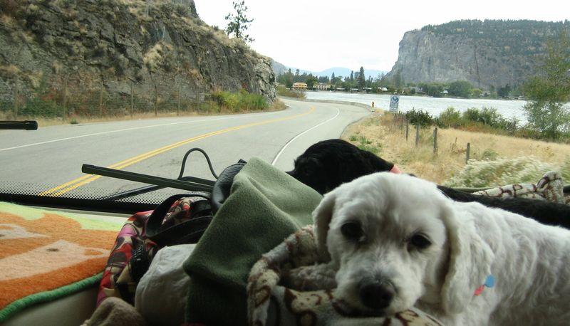 Dash dogs