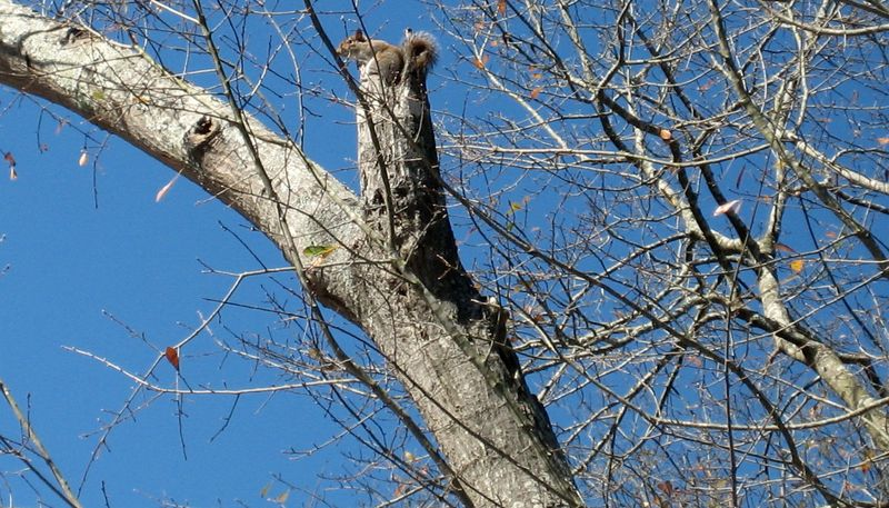 Wacky squirrel at the top of the nut tree