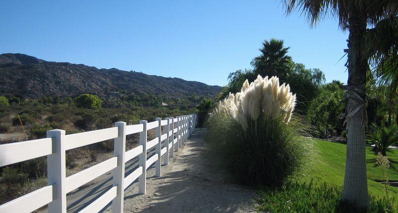 Pretty ornamental grasses