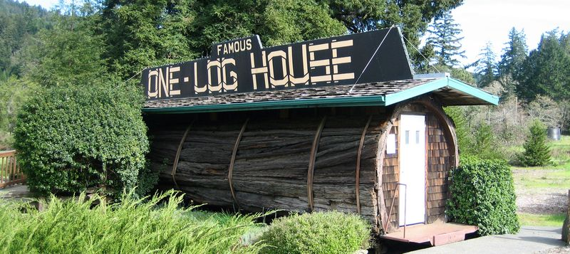 One log house in the Cali redwood forest