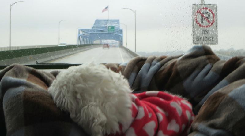 Bert on a rainy bridge