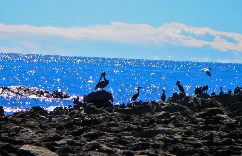 Birds sea & sun