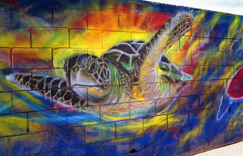 Tortugas del mar