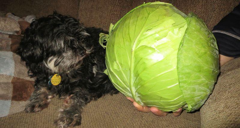 Suspicious veggie